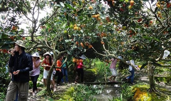 Tour Du Lịch Trải Ngiệm Miệt Vườn (2N1Đ)